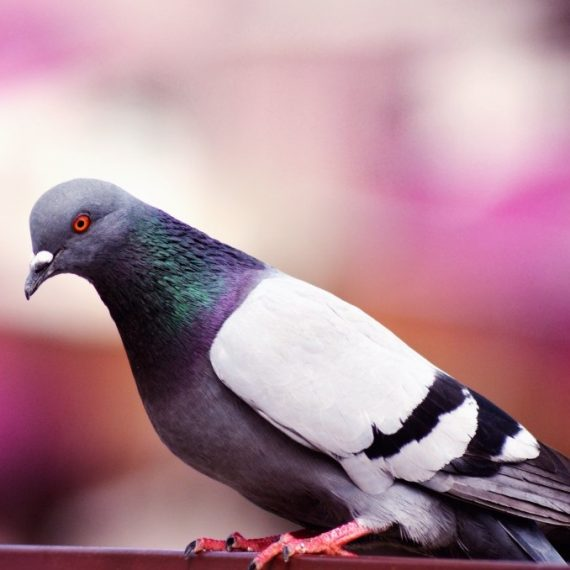 Birds, Pest Control in Upper Edmonton, N18. Call Now! 020 8166 9746