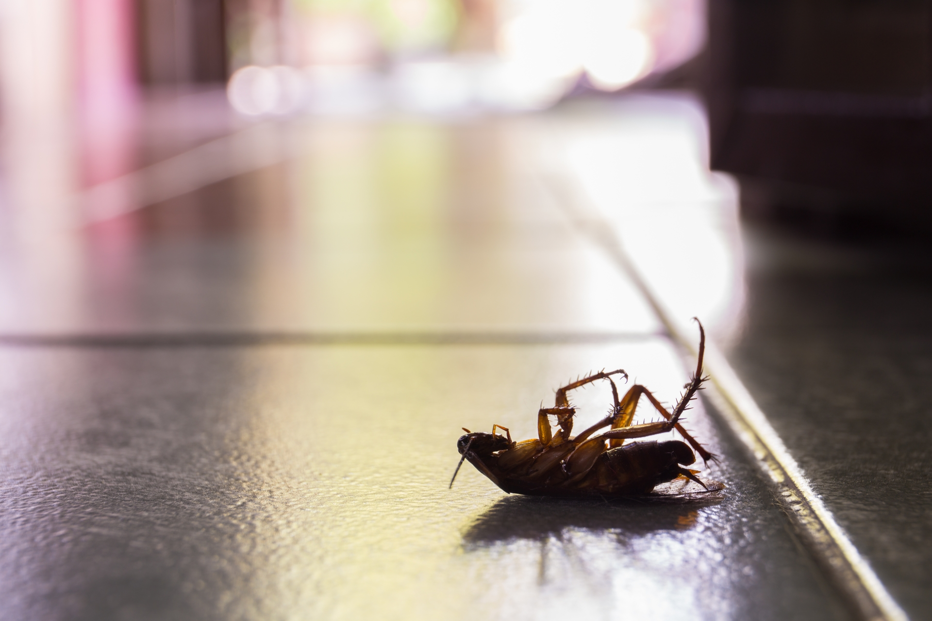 Cockroach Control, Pest Control in Upper Edmonton, N18. Call Now 020 8166 9746