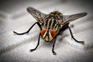 Insect Control, Pest Control in Upper Edmonton, N18. Call Now 020 8166 9746