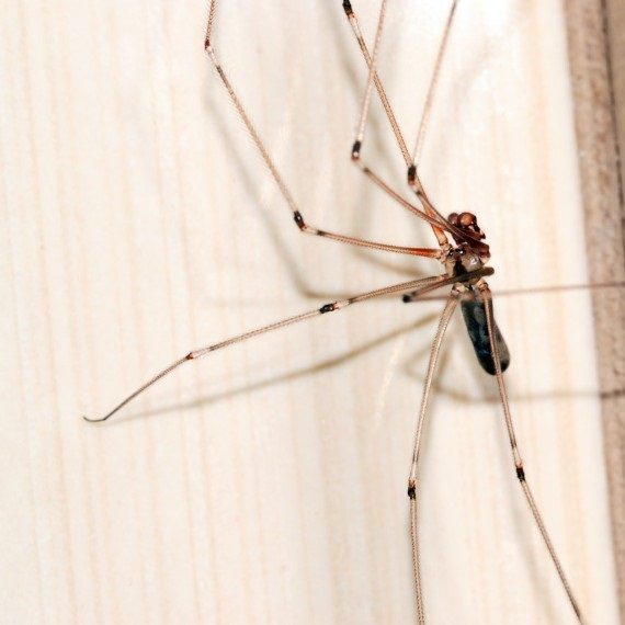 Spiders, Pest Control in Upper Edmonton, N18. Call Now! 020 8166 9746